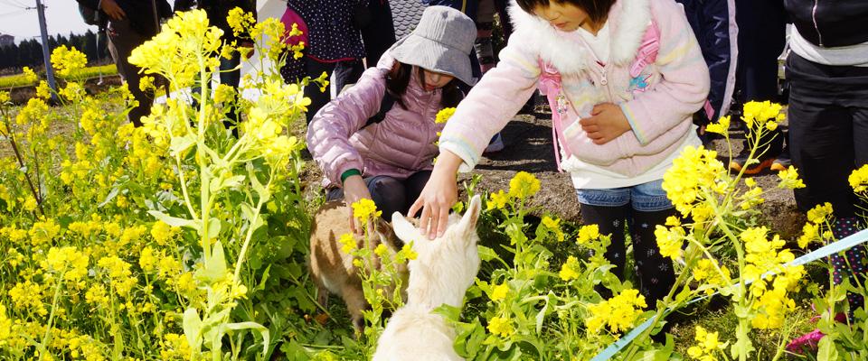 龍馬ハネムーンウォークin霧島 花はきりしま菜の花コース