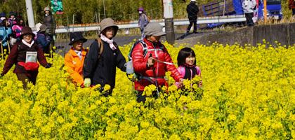 龍馬ハネムーンウオーク花はきりしま菜の花コース(約11km)