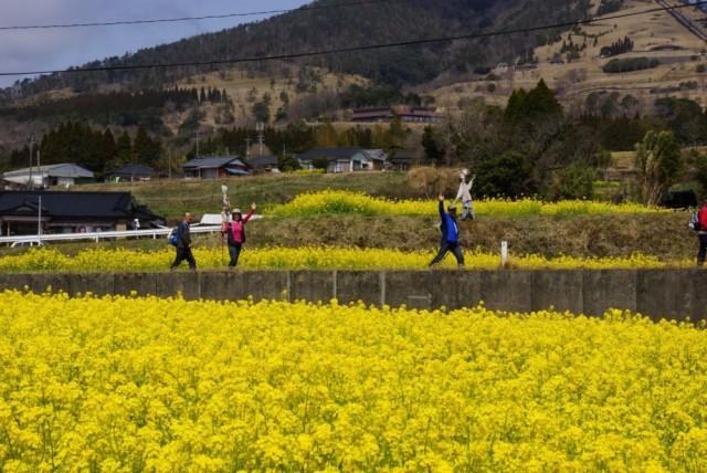 花はきりしま菜の花コース