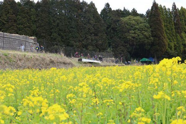 2017.03.19 菜の花C-180 改